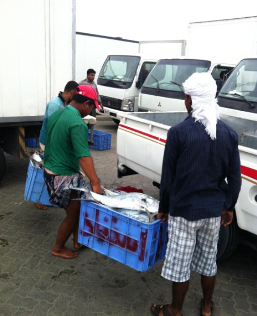 Dibba_Fish_Market_4
